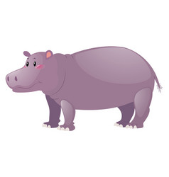 Cute hippo on white background vector