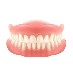 dental jaw or dentures false teeth with incisors vector image