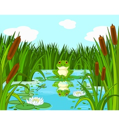 Frog on the lily vector image