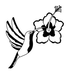 hummingbird flying hibiscus flower vector image