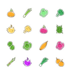 vegetables icons - onion cabbage and cauliflower vector image