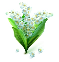 Flower lily valley Bouquet lily of valley vector image