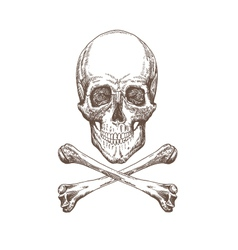 Skull and bones drawing vector image vector image