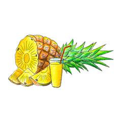 Juicy pineapple fruit vector