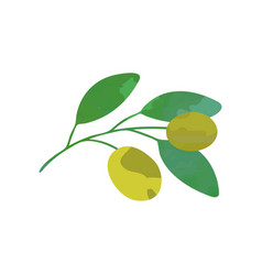 olive branch with green leaves natural vector image