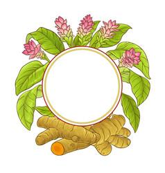 Turmeric plant frame vector