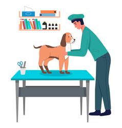 Veterinarian guy examines dog at vet room pet on vector