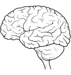Human brain side view vector