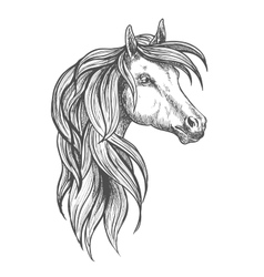 Cavalry morgan horse sketch symbol vector image