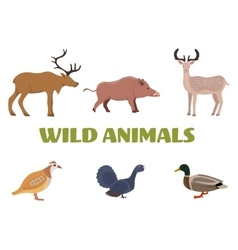 Wild forest animals with boar deer moose duck vector image