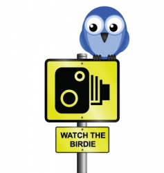bird speed camera vector image