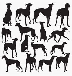 Grey hound silhouettes vector