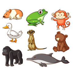 large set wildlife with many types land and vector image