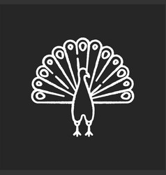 Peacock chalk white icon on black background vector