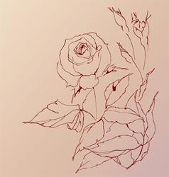 Sketch of a rose vector