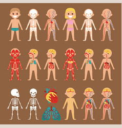 Anatomy poster with human body systems vector