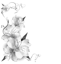 Background lilies grayscale vector image