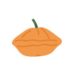 small orange pattypan squash whole patty pan vector image