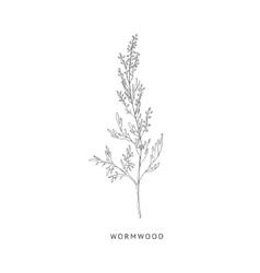 Wormwood Hand Drawn Realistic Sketch vector