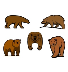 Brown wild bear characters vector image vector image
