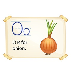 A letter O for onion vector image