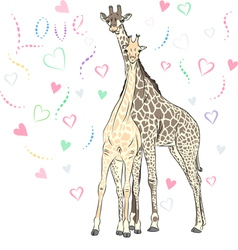 Funny couple in love giraffes vector