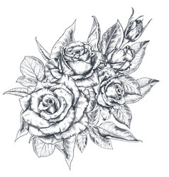 hand drawn rose flowers bouquet isolated on white vector image