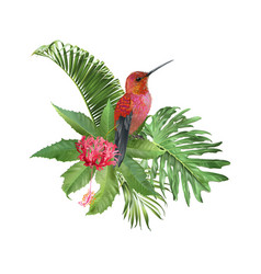 Hummingbird tropic arrangement vector