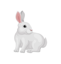 small white rabbit sitting and looking around vector image