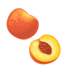 whole and half peach with seed flat color vector image
