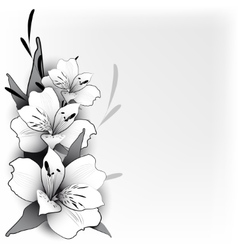 Background lily in graphics vector