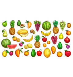 fruits sketch icons tropical exotic farm vector image