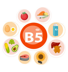 Infographic set vitamin b5 and useful products vector