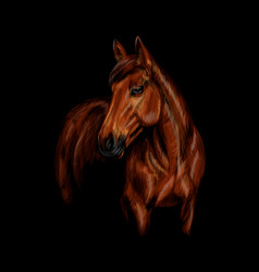 portrait horse on black background vector image