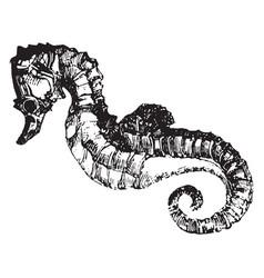Seahorse vintage vector
