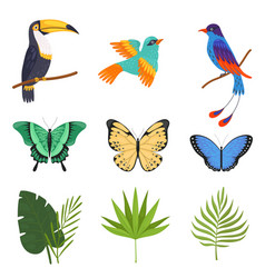 tropical collection beautiful butterflies birds vector image