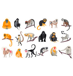 Collection different breeds monkeys vector