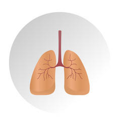 Lung cancer diagram in detail lung vector