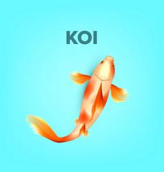 oriental white with orange spots carp koi vector image