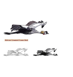 flying african crowned crane bird vector image