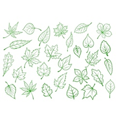 Green leaves set in outline style vector image