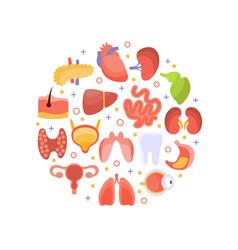 Human iinternal organs round shape healthcare vector