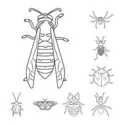 Insect and fly icon set of vector