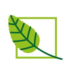 Tea leafs product frame vector
