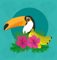 Tropic leaves flowers and toucan design vector