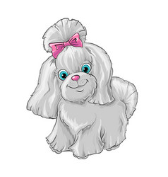 a cute dog yorkshire terrier vector image