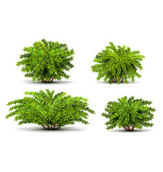 shrubbery 3d isometric bushes isolated on white vector image