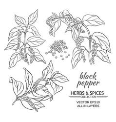 Black ground pepper vector