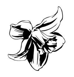 Black ink narcissus flower vector