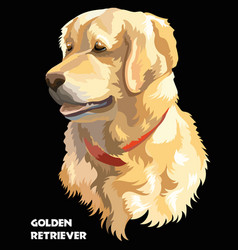 Colorful golden retriever vector